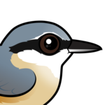 Birdorable Eurasian Nuthatch