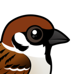 Birdorable Eurasian Tree Sparrow