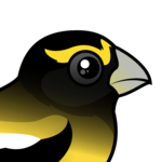 Birdorable Evening Grosbeak