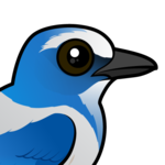 Birdorable Florida Scrub-Jay