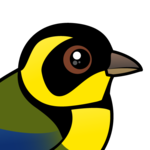 Birdorable Gold-ringed Tanager