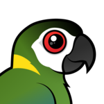 Birdorable Golden-collared Macaw