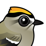 Birdorable Golden-crowned Kinglet