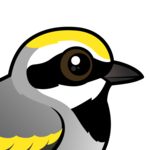 Birdorable Golden-winged Warbler