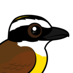Birdorable Great Kiskadee