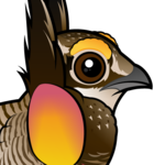 Birdorable Greater Prairie-Chicken