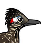 Birdorable Greater Roadrunner