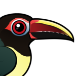 Birdorable Green Aracari