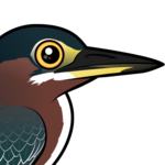 Birdorable Green Heron