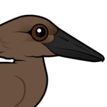 Birdorable Hamerkop