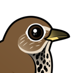 Birdorable Hermit Thrush