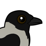 Birdorable Hooded Crow