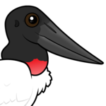 Birdorable Jabiru