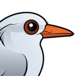 Birdorable Kagu