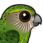 Birdorable Kakapo
