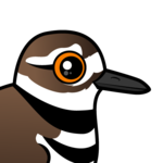 Birdorable Killdeer