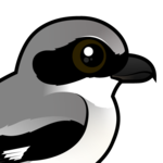 Birdorable Loggerhead Shrike