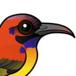 Birdorable Mrs. Gould's Sunbird