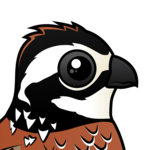 Birdorable Northern Bobwhite