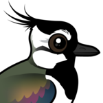 Birdorable Northern Lapwing