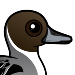 Birdorable Northern Pintail