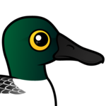 Birdorable Northern Shoveler