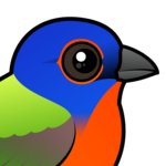 Birdorable Painted Bunting