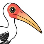 Birdorable Painted Stork