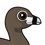 Birdorable Pied-billed Grebe