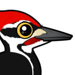 Birdorable Pileated Woodpecker