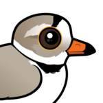 Birdorable Piping Plover