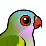 Birdorable Princess Parrot