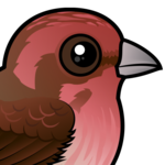 Birdorable Purple Finch