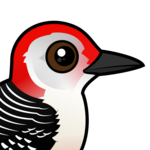 Birdorable Red-bellied Woodpecker