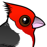 Birdorable Red-crested Cardinal