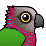 Birdorable Red-fan Parrot