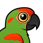 Birdorable Red-fronted Macaw