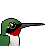 Birdorable Ruby-throated Hummingbird