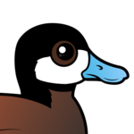 Birdorable Ruddy Duck