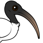 Birdorable Sacred Ibis