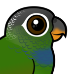 Birdorable Scaly-headed Parrot