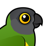 Birdorable Senegal Parrot