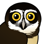 Birdorable Spectacled Owl