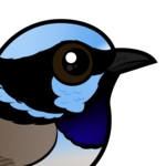 Birdorable Superb Fairywren