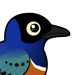 Birdorable Superb Starling