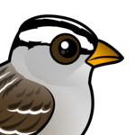 Birdorable White-crowned Sparrow