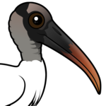 Birdorable Wood Stork