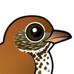 Birdorable Wood Thrush