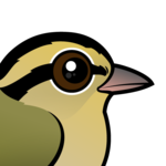 Birdorable Worm-eating Warbler