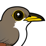 Birdorable Yellow-billed Cuckoo